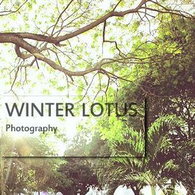 Winter Lotus Photography