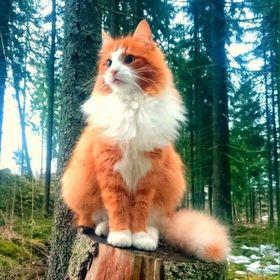 Mi Gato Curioso