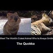 Quokka Sandgate