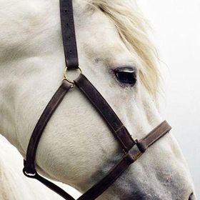 Alyssa & Horses