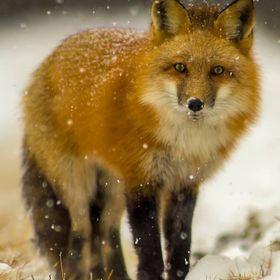Kris Tynski  Nature Photographer
