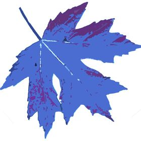 Blue Maple Photography