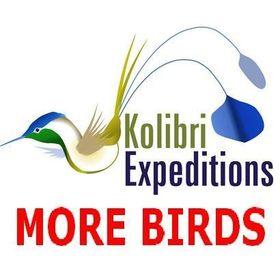 Kolibri Expeditions - Gunnar Engblom - Birding Peru