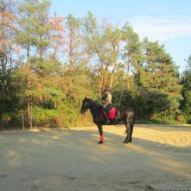U-4-07 7 Taille Heritage Crochet Gants d/'équitation cheval équestre naturel//tan