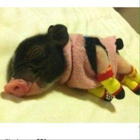 Pig Pen