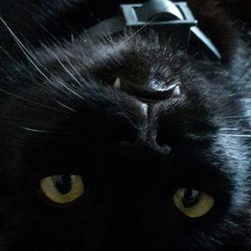 Hot Sexy Teen mačička pics