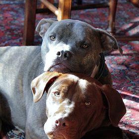 giardia hondenforum