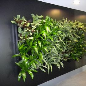 Green Design Indoor Plant Hire Sydney