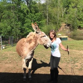 Donkey Listener : Donkey Training and Custom Tack Maker