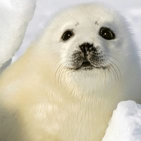Seal Dichtung