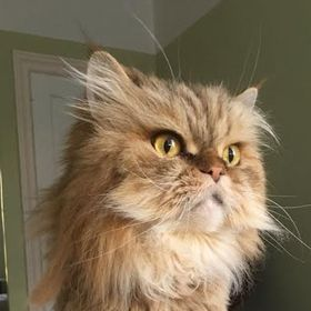 Kitty in NY