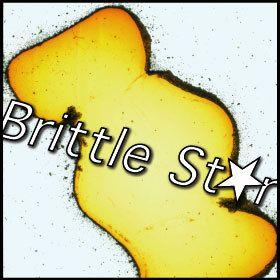 Brittle Star Magazine