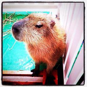 capybarajp