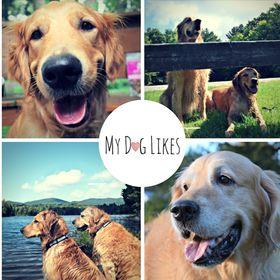 MyDogLikes | Dog Health, Wellness and Lifestyle