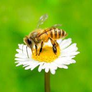 Lappe's Bee Supply & Honey Farm Company LLC