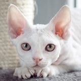 Na drapaku Blog o kotach