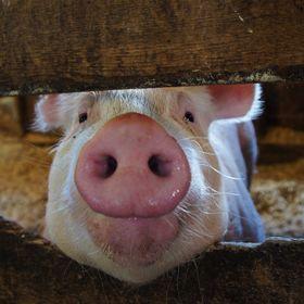 the blind pig blog