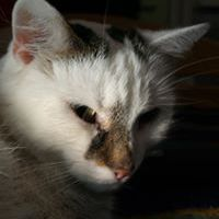 Chrupka Miau