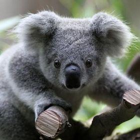 Nadia Koala