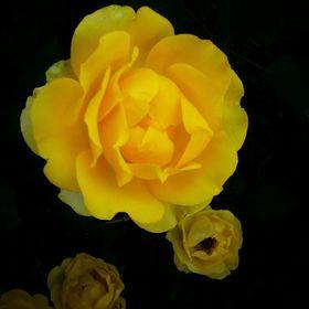 Rab Virág