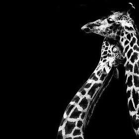 Raffa La Dondolo Giraffa.Gi Raffa Cocofelix Su Pinterest