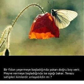 ASK YLGN