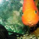 Radka Rybová