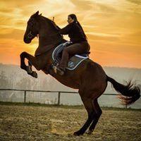 Jana-Lókiképzés-Horse Trainig