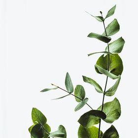 Kiranpreet Singh | Indoor Gardening | DIY Projects