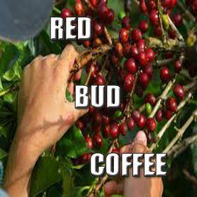 Red Bud Coffee