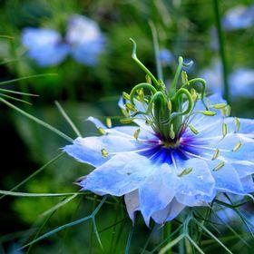 Flora Paradise