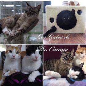 Los Gatos De Dr. Canuto