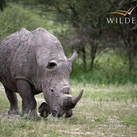 Craig Glatthaar - Wilderness Safaris