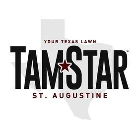 TamStar St. Augustine Grass