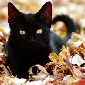 Katts Autumn