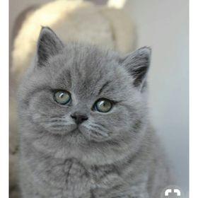 Elena kitty