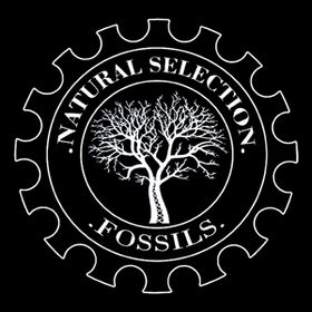 Natural Selection Fossils