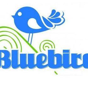Bluebird CSA.com
