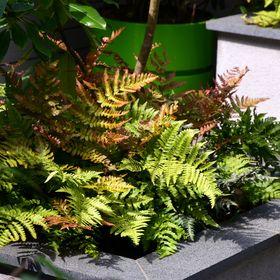 David Keegan Garden Design & Landscape Consultancy
