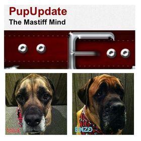 PupUpdate.com