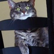 Sphynx Cat Merry Christmas  Tee Women/'s Image by Shutterstock