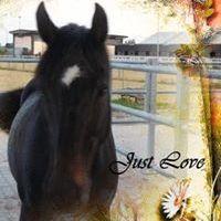 Curley's Horseblog