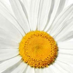 Healingscents Aromatherapy