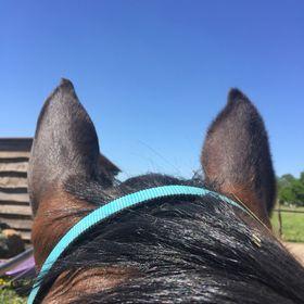 Lucky_horse_