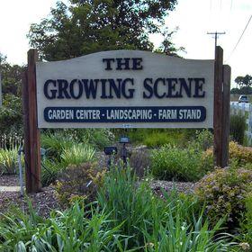 The Growing Scene