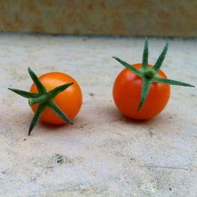 One tomato, two tomato