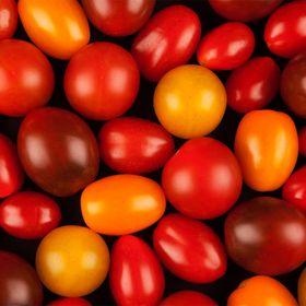 Azura La Tomate