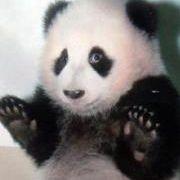Swim Panda