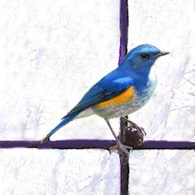Bluebird Bespoke Ltd