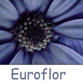 Euroflor